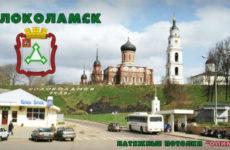 Куда сдать макулатуру в Волоколамске?